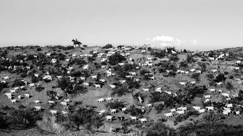 Premio para las fotos del pastoreo  en el norte