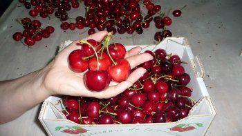 realizaran una venta directa de frutas finas en neuquen capital