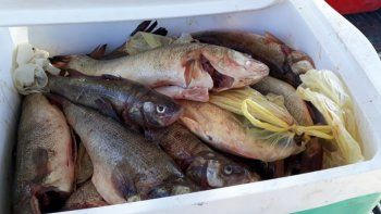 le secuestraron gran cantidad de pescado ilegal que llevaba en el auto