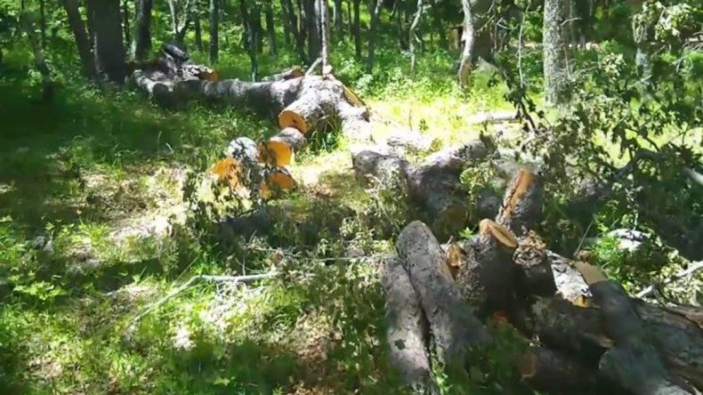 Denuncian tala indiscriminada en el bosque andino patagónico de Las Ovejas