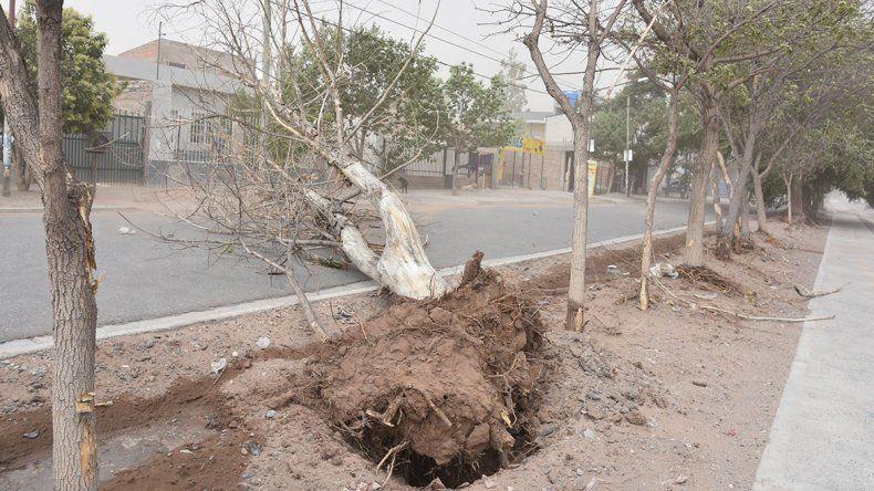 La caída de árboles por el viento provocó un apagón en el Alto neuquino