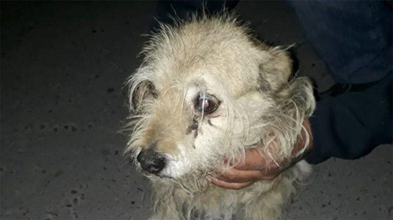 Decenas de perros perdidos en Neuquén por la pirotecnia
