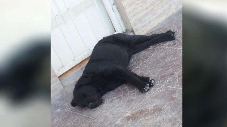 Aberrante: vecinos rescataron a un perro que era violado por su dueño