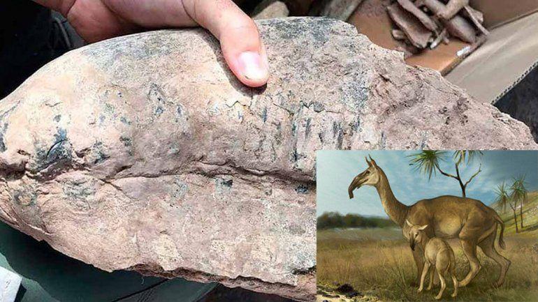 En Santa Fe, un vecino halló el fósil de un mamífero