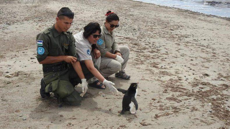 Sorpresa: un pingüino apareció entre veraneantes en Las Grutas