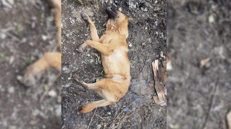 Tristeza: encontraron muerta a su perra, con un disparo en el estómago