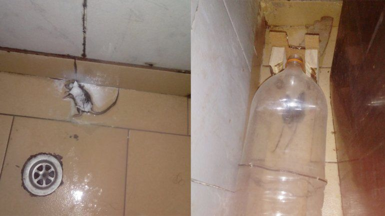 Por la mugre de una vecina, denuncia invasión de ratones en su casa