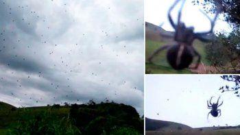 una lluvia de aranas sorprendio a todos en brasil
