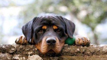 eutanasia canina: hoy habra una marcha en cutral co