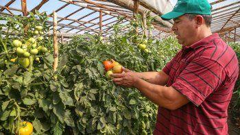 les buscaran mercados a los tomates neuquinos