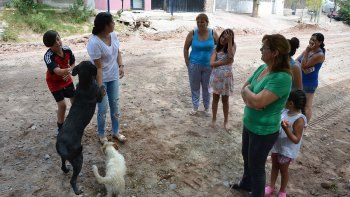 alerta en villa ceferino por una nueva matanza de perros
