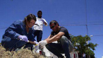 zoonosis investiga la muerte de los perros en barrio villa ceferino