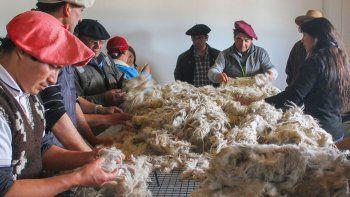 turquia abrio su mercado a la lana mohair neuquina