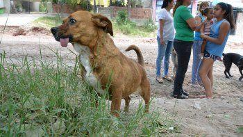 alarma en villa ceferino: murieron envenenados otros dos perros en el barrio