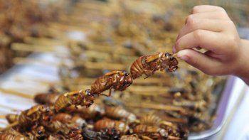 comer insectos, la tendencia gourmet que se viene
