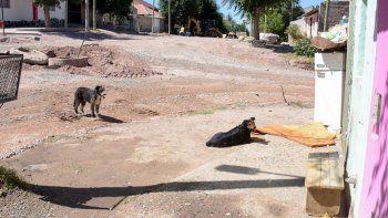 perros muertos en villa ceferino: hallan dos mas
