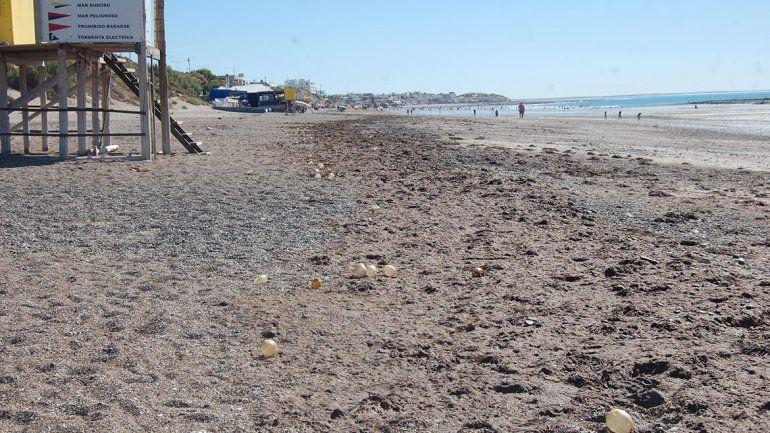 Invasión de algas en la playa