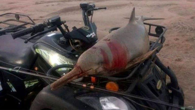 Indignante: mató a un delfín, lo paseó en su cuatriciclo y se lo comió
