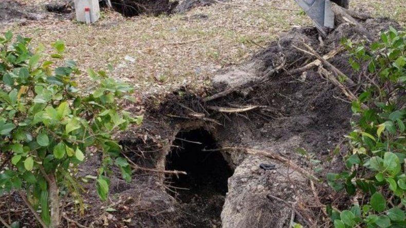 Tapaban un bache pero era un túnel que iba al banco