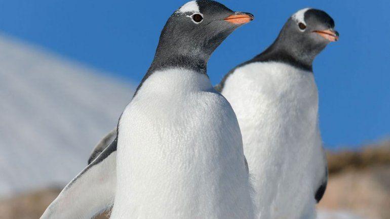 Algunas lecciones de vida de los pingüinos gays