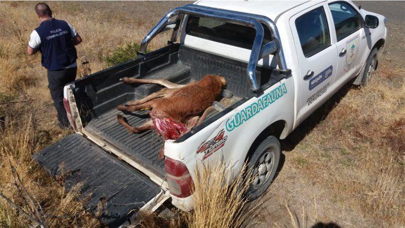 Dos militares faenaron un ciervo y se dieron a la fuga