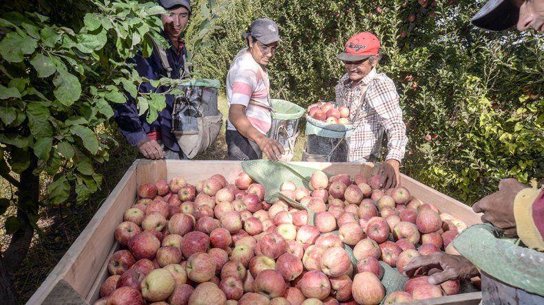 Los productores de manzanas se quedan con poco del precio final