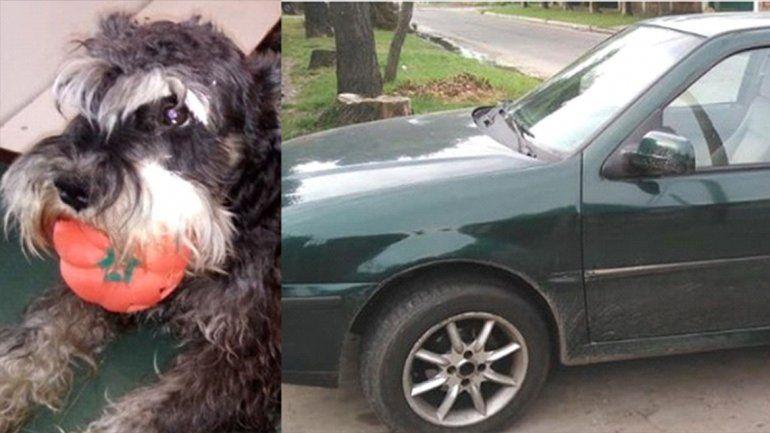 Perdió a su perro y ofrece un auto como recompensa