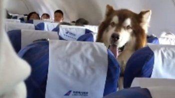 un perro asistente viajo como pasajero en un avion