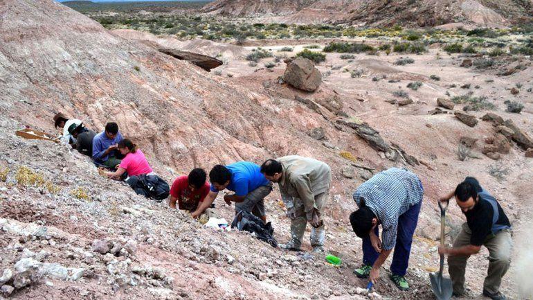 Hallaron los restos de un reptil desconocido
