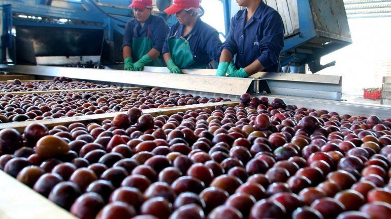 El caso Chile: cómo el acuerdo con la Unión Europea favorece a los productores frutícolas