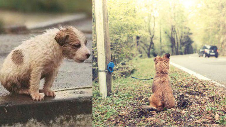 ¿Cuál es el insólito motivo por el cual en el verano crece el abandono de mascotas?