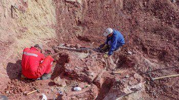 presentaran nuevo dino encontrado en el norte neuquino