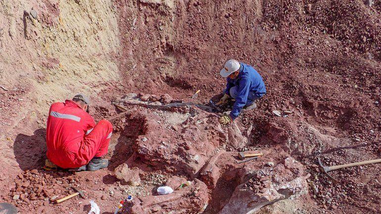 Presentarán nuevo dino encontrado en el norte neuquino