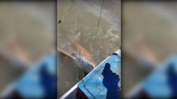 bahia blanca: capturan un tiburon y lo rematan a tiros