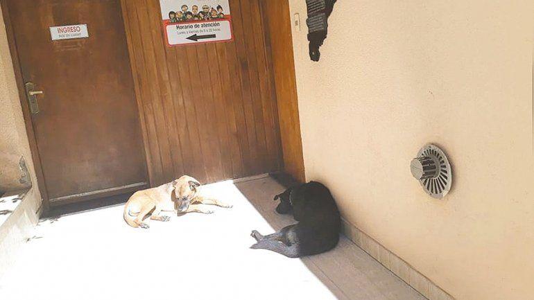 La protección de mascotas también llega a mediación
