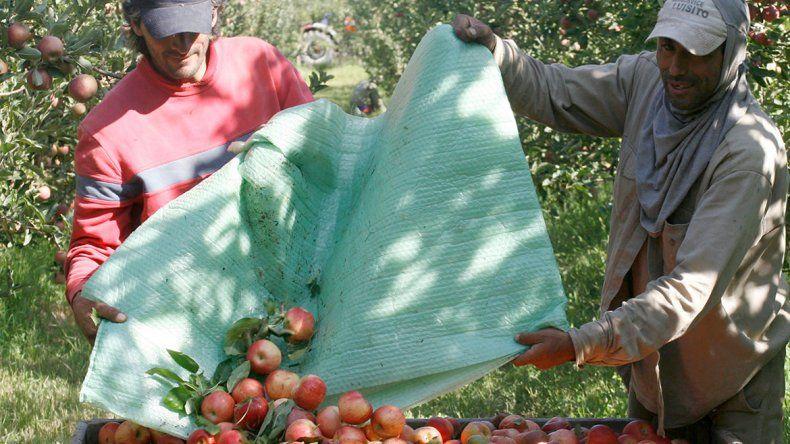 Productores del Alto Valle llamaron  a otro frutazo