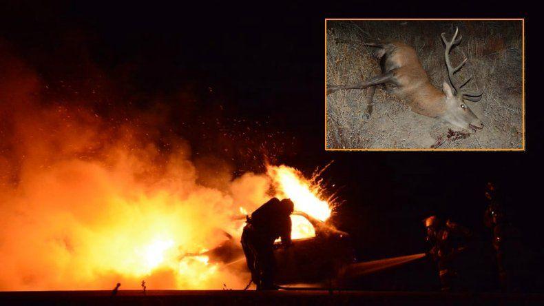 Ruta 40: chocó contra un ciervo y se  le prendió fuego el auto