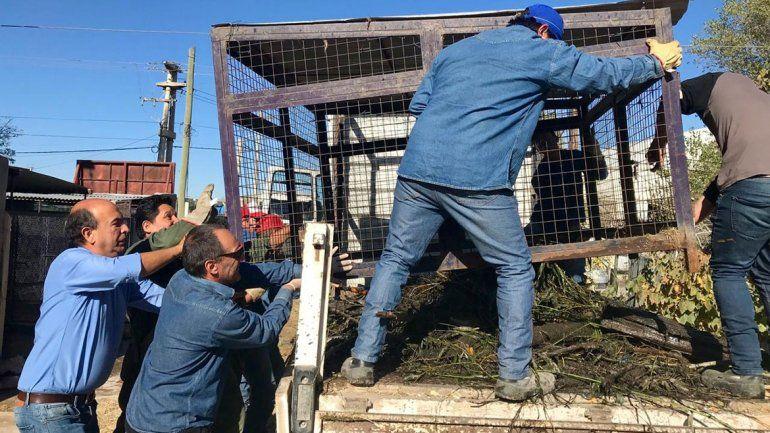 Chau caniles: la Muni no encerrará más a los perros