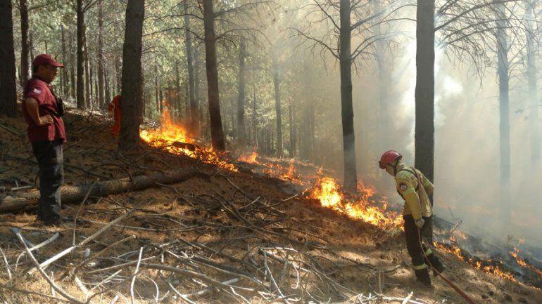 Controlaron un incendio intencional en el bosque de Corfone