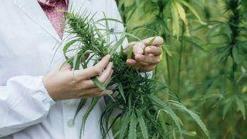 cannabis medicinal: proponen crear registro para evitar la persecucion