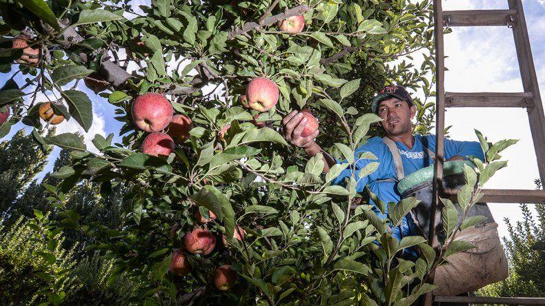 Crítica chacarera por el cierre del cultivo de manzana