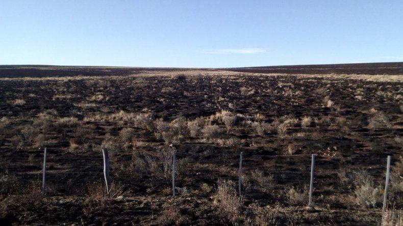El incendio en la zona del Collon Cura fue controlado