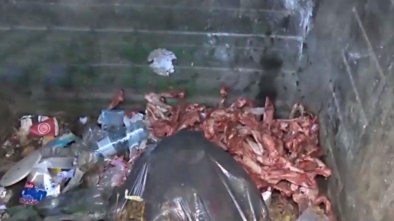 Hallan 30 esqueletos de perros faenados en Rosario
