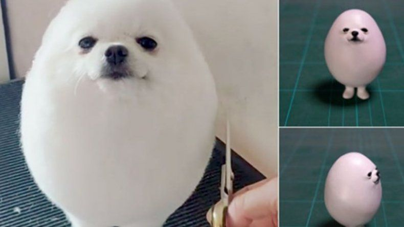 El perro que la rompe en las redes sociales porque parece un huevo