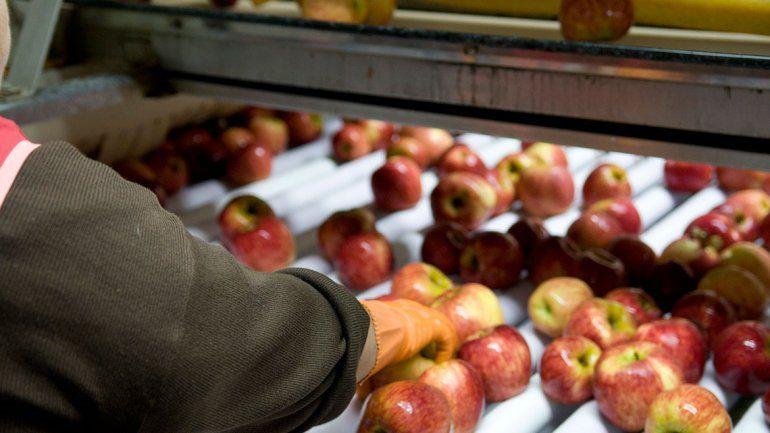 Brasil le dio el OK y el Valle vuelve a exportar manzanas