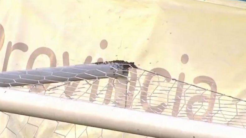 Insólito: abejas invadieron una cancha, demoraron el partido y las ahuyentaron con ¡matafuegos!