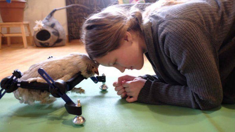 Insólito: tiene como mascota a una gallina discapacitada