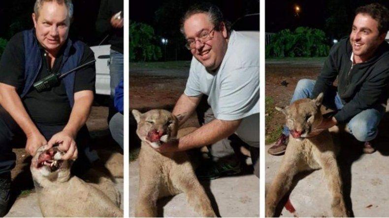 Detienen a empleado municipal por matar y faenar un puma