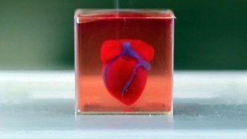 imprimieron un corazon con tejidos y vasos en 3d