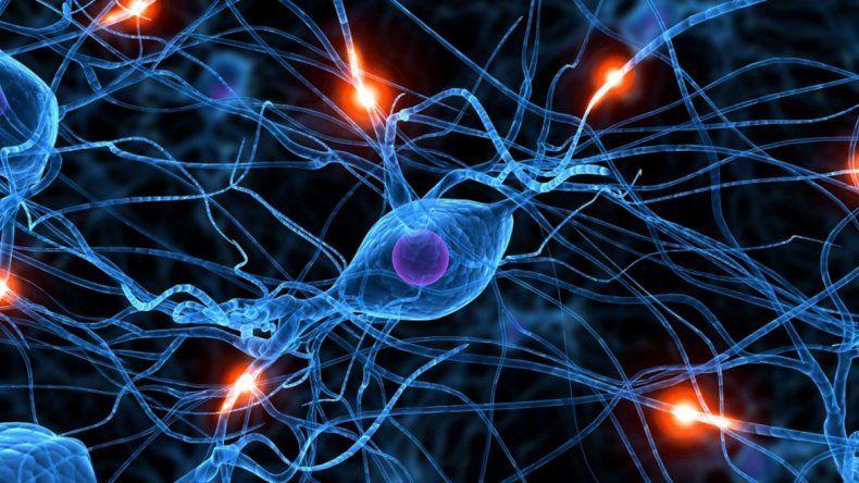 Lograron que un cerebro muerto tenga actividad